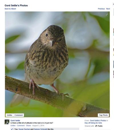 819 Blog GordSettl 20140803 birdattitude 4in100ppi