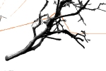 819 Blog tree pwrLines 20150209a 6in